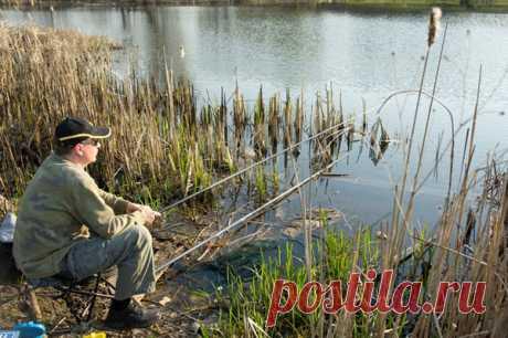 Особенности ловли карася весной на поплавок | Рыбалка и снасти | Яндекс Дзен