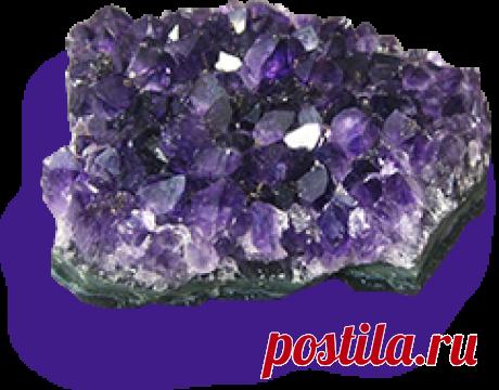 Камневеды