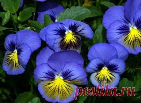 Времени ждать нет: пять цветов, которые нужно высаживать во второй половине марта. А цвести они будут все лето и даже осень