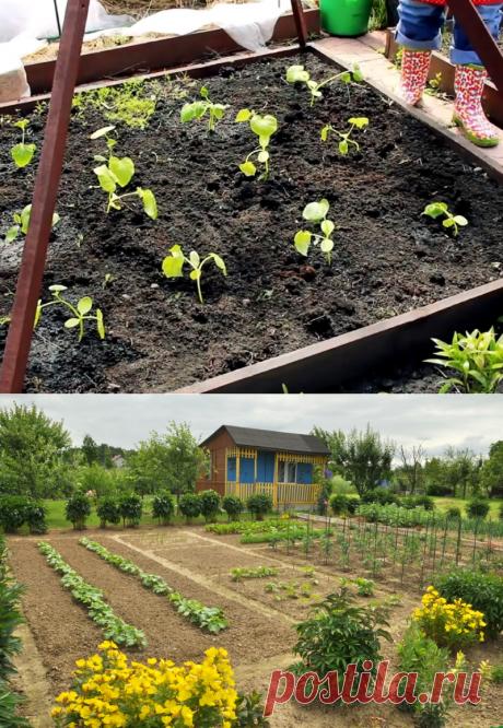 Вот как выращивать огурцы в открытом грунте. Самое полезное удобрение без лишней возни -