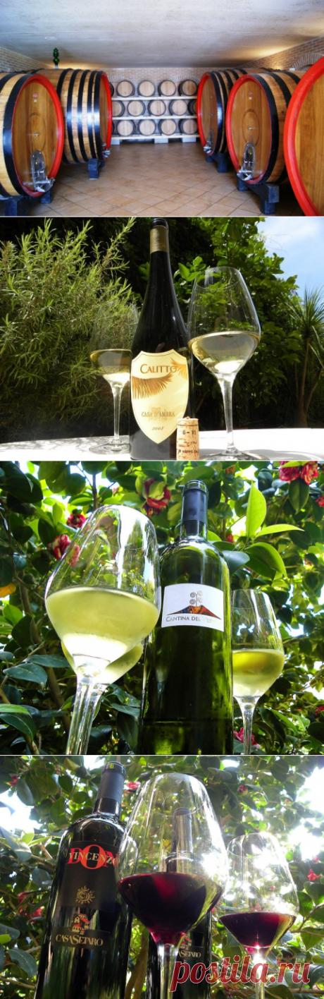 Неаполитанское вино в  провинции Campania - обзор Италии