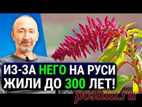 ОН дарует бессмертие, защищает от РАКА и старения! ЕГО состав как у грудного молока! Еда №1 на Руси.