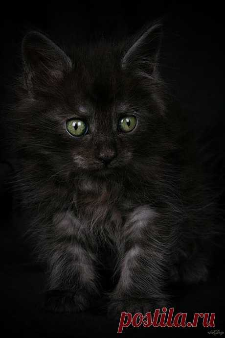 Kitten.  Sorcerer  by Stephie Kaczala :)