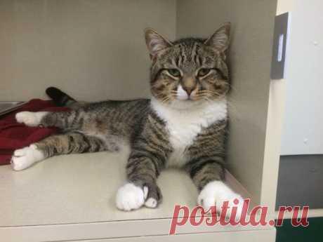 Приютский кот с огромными лапами изменил жизнь одного мужчины