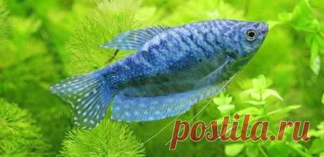 Рыбье новоселье. Грамотно пересаживаем аквариумных рыб   Быково-медиа
