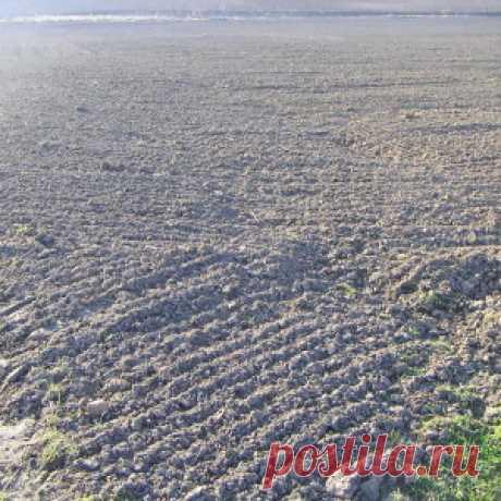 9 способов определить кислотность почвы - Огород без забот