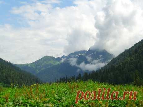В горах Абхазии Альпийские луга