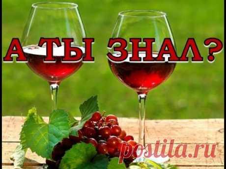 Домашнее виноградное вино. Пошаговый рецепт