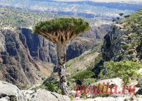 """В переводе с санскрита """"Sokotra"""" означает Остров Счастья. И с этим легко согласиться – буйство ботанического очарования соседствует здесь с изоляцией, тишиной и огромными белоснежными пляжами."""