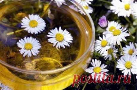 How to make a camomile?