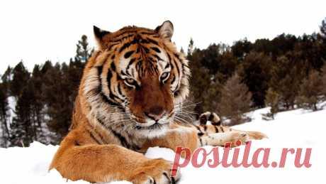 В каком отчаянии должно находиться дикое животное, что бы обратиться за помощью к человеку!?