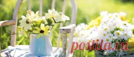 Лунный посевной календарь на июнь 2020 садовода и огородника Лунный посевной календарь на июнь 2020 садовода и огородника. Какие работы в саду и огороде нужно провести в начале лета. Благоприятные и запрещенные дни