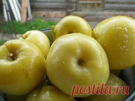 Рецепт моченых яблок   Заготавливают здоровые, крепкие яблоки осенне-зимних или зимних сортов, которые обладают кислым вкусом и плотной мякотью. Яблоки летних сортов не подходят для этой цели, их лучше использовать в других рецептах.   Через две недели после сбора с дерева, яблоки необходимо перебрать, промыть и можно начинать замачивать.   Яблоки можно замачивать в деревянной кадке или эмалированном баке. На дно емкости выстилают несколько слоев, предварительно промытых, ...