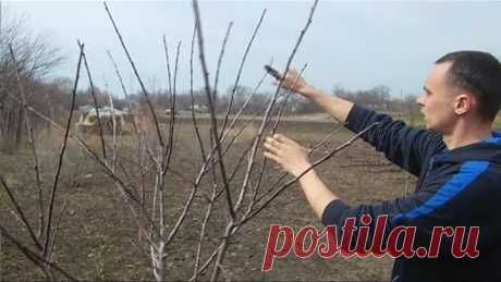 Весенняя обрезка формировка фруктового сада / Хочешь большой урожай делай так!