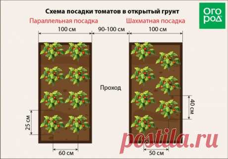 At what distance to plant tomatoes in the greenhouse and an open ground (scheme)   Tomatoes (Огород.ru)