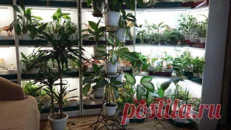 Комнатные растения, которые не боятся тени | Домадил - DomaDeaL.Ru | Яндекс Дзен