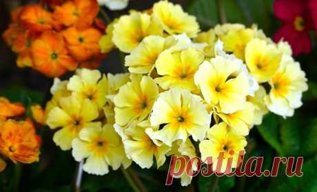 Эти бордюрные цветы украсят клумбы и дорожки в саду | Про огород цветы и дачу | Пульс Mail.ru Многолетние низкорослые цветы для клумбы