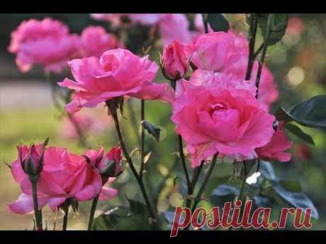 Приятная музыка. Природа и Красивые ЦВЕТЫ. Расслабляющая музыка ~Красивый пейзаж ~Красивые цветы Самоделки для Дачи https://www.youtube.com/playlist?list=PLS...