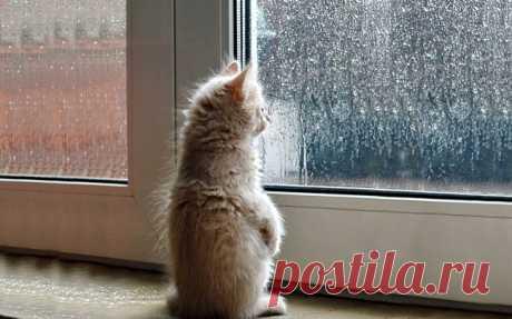 Если жизнь беспощадно бьёт, И до срыва осталось немного, Лучше вспомни: дома ждёт кот, Это значит - не всё так плохо.