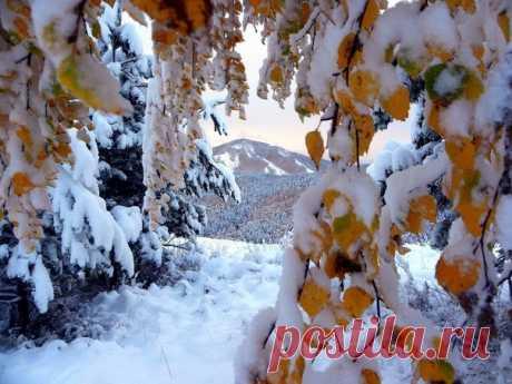 Арка из осени в зиму