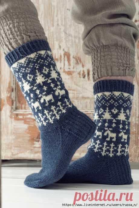 Los calcetines con zhakkardom