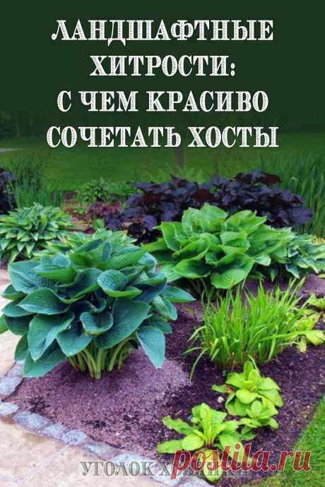 Дизайн сада во многом зависит от того, насколько органично вы подобрали соседство растений друг с другом, учли схожесть ухода и условия выращивания.