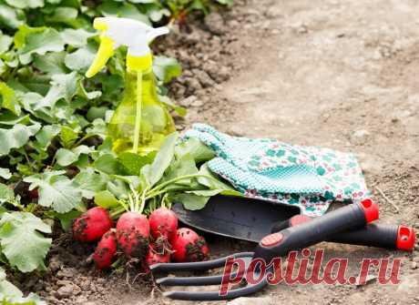 Как получить обильный урожай редиса: секреты опытных садоводов | О Фазенде. Загородная жизнь | Яндекс Дзен