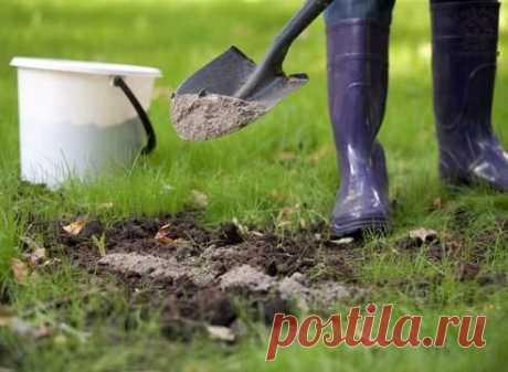 Всё про удобрения и подкормки: минеральные и органические - Садоводка