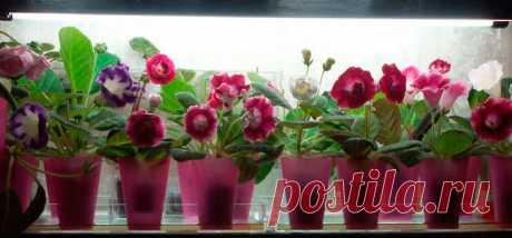 Лампы для растений - как выбрать и какие лучше (фитосветильники, светодиодные и натриевые), отзывы