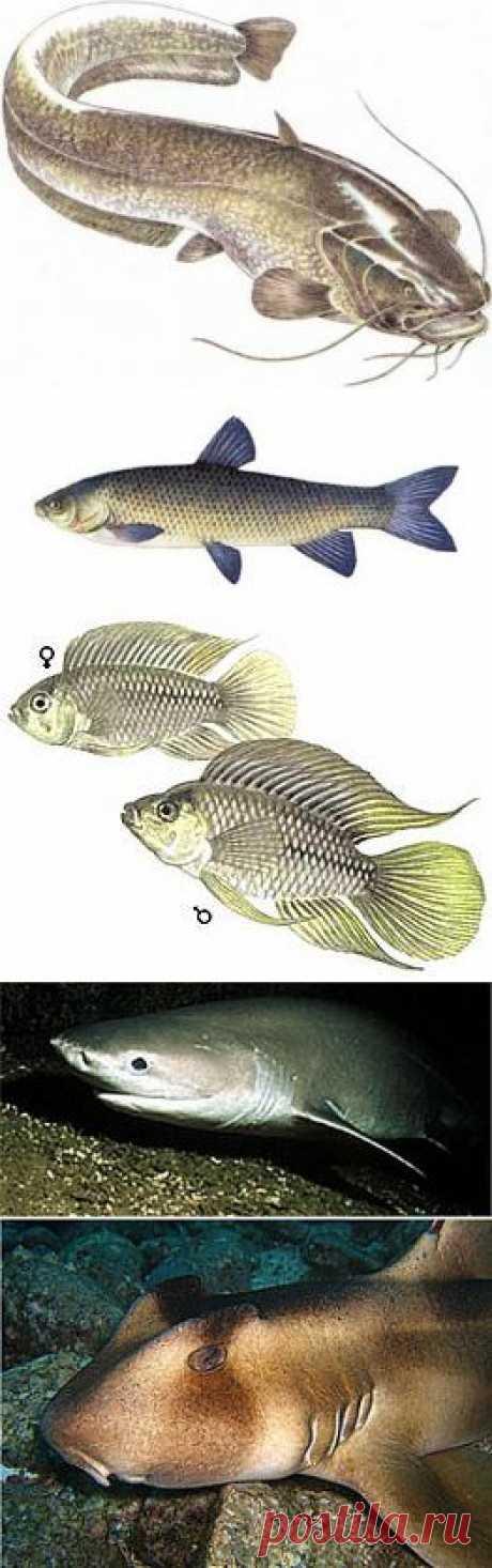 Алфавитный каталог рыб