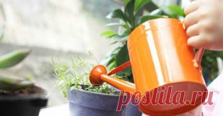 2 СУПЕР ПОДКОРМКИ/Комнатные цветы будут расти как на дрожжах  Покажу как сделать 2 супер подкормки для комнатных цветов. Подкормки помогут растениям нарастить листву, быстро расти, цвести и не болеть. Для первой подкормки нужен йод, для второй - сахар и дрожжи.…