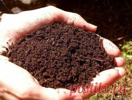 Как необычным способом определить кислотности почвы