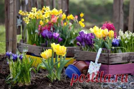 Чем подкормить цветы весной Весна – период роста и расцвета. И в минеральной поддержке в это время нуждаются не только овощные культуры на грядках, но и цветочные, а также растения с декоративными листьями. Сохраните себе удобны...