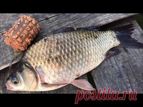 Фидерная рыбалка на карася   ловля карася на фидер   фидер для начинающих   рыбалка на фидер 2020