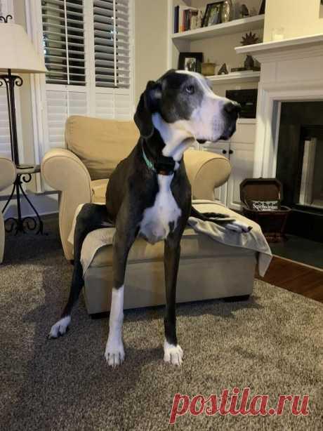 Собаки, которые отказываются сидеть как нормальные животные / Питомцы