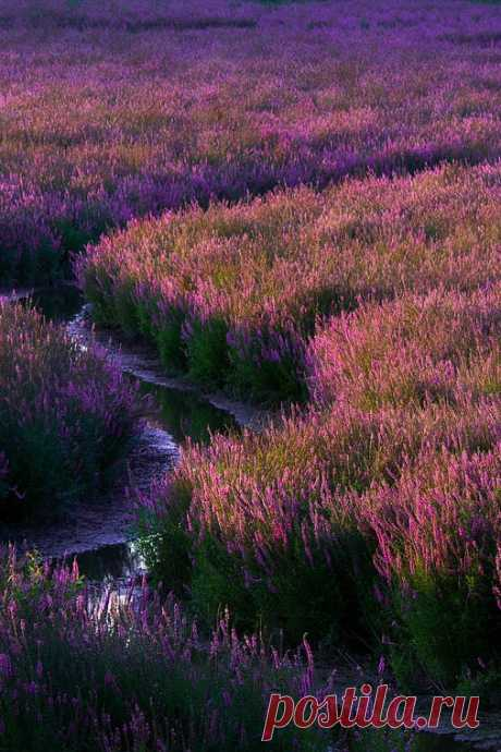 Void Whisper — ponderation: Fields of Purple by Terence Leezy