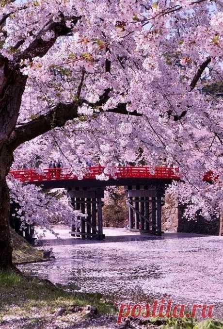 Hirosaki Castle (Hirosaki Park) , Aomori, Japan  |  Pinterest • Всемирный каталог идей