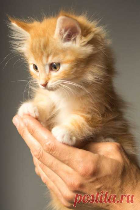 Подборка фото с котиками. Милые создания. №lublusebya-55331227042019 | Люблю Себя