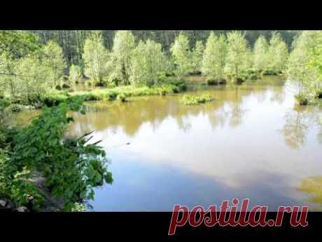 Лесное озеро - YouTube