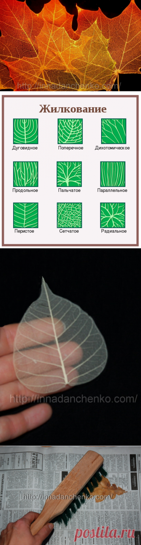 Скелетирование листьев
