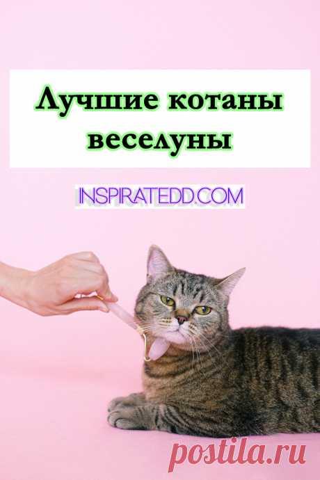 Самые смешные видео и гифки с котами. Коты, кошки и котики. Если ты ищешь приколы с кошками или просто хочешь провести время с позитивом, тогда ты однозначно по адресу. Эта подборка порадует изобилием умопомрачительных гифок и захватывающих видео.