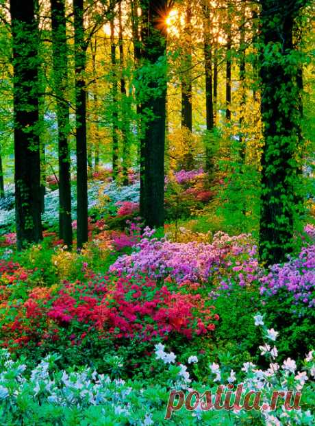 coiour-my-world: nature's colourful glory