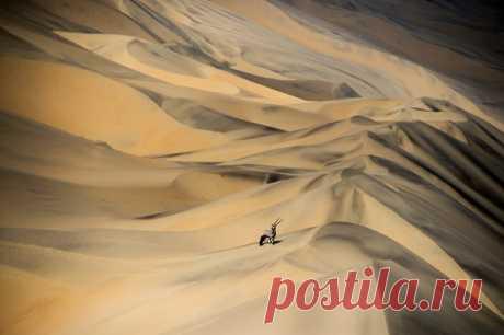 Бесконечные пески Намиб – самой древней и второй по величине пустыни в мире – только кажутся безжизненными. Здесь обитают страусы, горные зебры, ориксы, жирафы и даже настоящие африканские слоны.