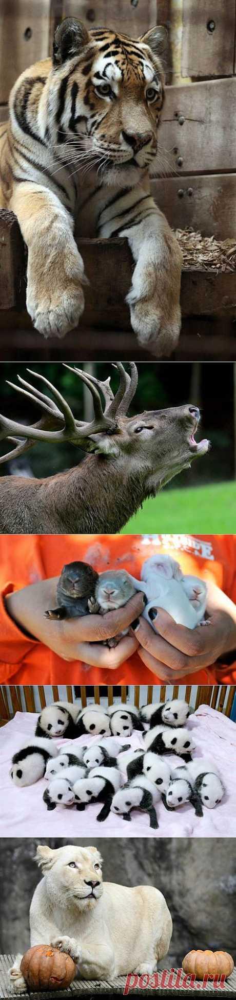 Животный мир в фотографиях (14 шт) » Зооблог.ру - Забавные Животные