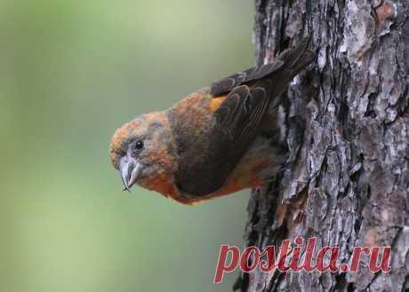 Птица, которая выводит птенцов зимой | Кафедра зоологии | Яндекс Дзен