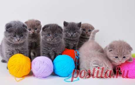 Новые фотографии рабочий стол котята.