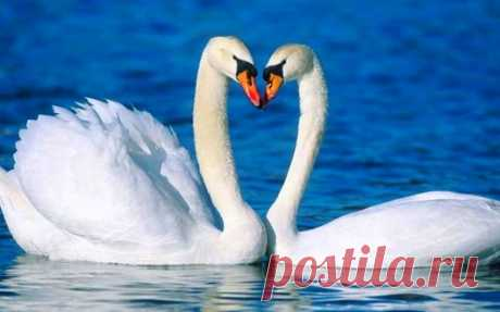 Los animales, cerca de que es posible aprender la fidelidad y el amor...