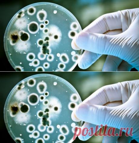 Как избавиться от бактерий, которые вызывают изжогу и вздутие...