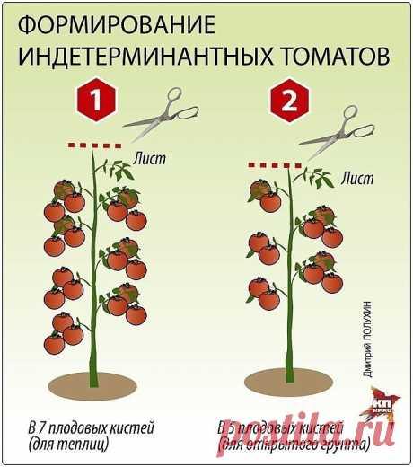 ПОМИДОРНАЯ НАУКА. ВАРИАНТЫ ФОРМИРОВАНИЯ ТОМАТНЫХ КУСТОВ Сохраните, чтобы не потерять!  Разбираемся с разными вариантами формирования томатных кустов  Как получить хороший урожай?  Когда читаешь статьи о пасынковании томатов, кажется, что они написаны на китайском языке. Вот, к примеру: «детерминантные томаты формируют с переводом точки роста на боковой побег». Буквы вроде русские, а смысл уловить практически невозможно. Нет, специалист, конечно, сразу поймет, о чем речь, а...