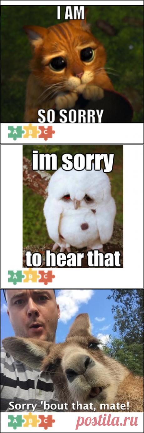 """Английский - Такое разное слово """"sorry"""""""